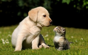 cute-puppy-with-a-little-kitty-on-the-grass4.jpg